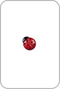 Renaissance Buttons Renaissance Buttons - Ladybug Button - Red